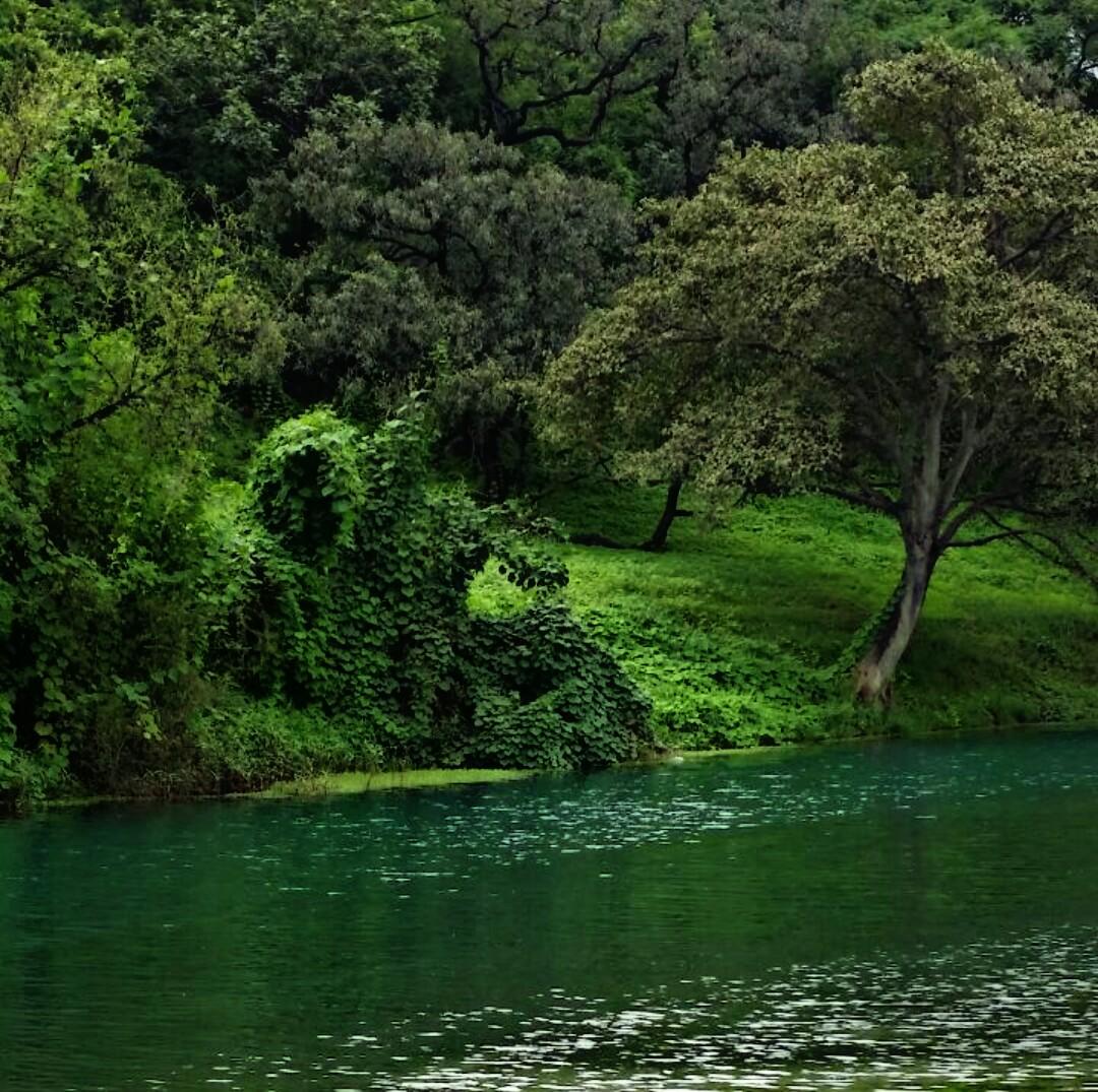 صور طبيعة صلالة في سلطنة عمان P_1708tvb9