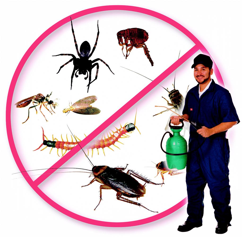 للتخلص النمل