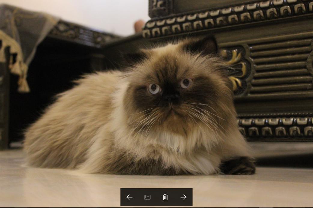 للبيع قطط هملايا بيكي فيس بالرياض P_5071u2hf4